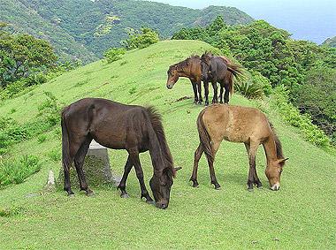pferde die eis transportieren